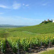 1200px Vignobles de Champagne pres d Ay DSC 0267