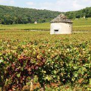 Bourgogne cabote 1