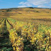 Bourgogne le Vignoble de la Côte