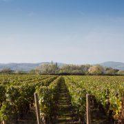 TOKELA JimRosemberg Bourgogne 2