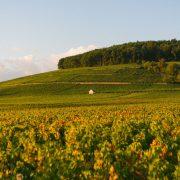 TOKELA JimRosemberg Bourgogne 45 1024x683
