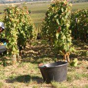 vines 2408669 1920