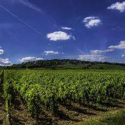 vines 2766552 1920