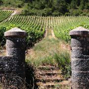 vineyard 374373 1920
