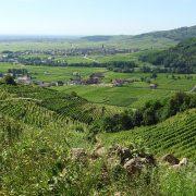 vineyard 1888915 1920