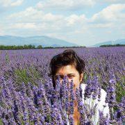 Provence Lavande à Valensole 1