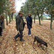 Provence Truffes Vins 2